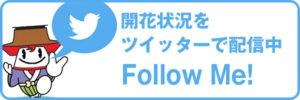 ツイッターで開花状況を配信中 Follow Me